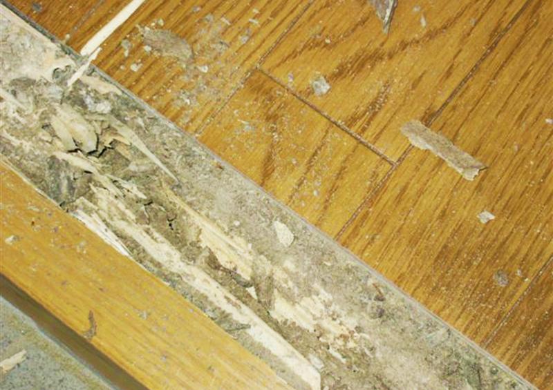住宅の定期メンテナンス:蟻害の写真