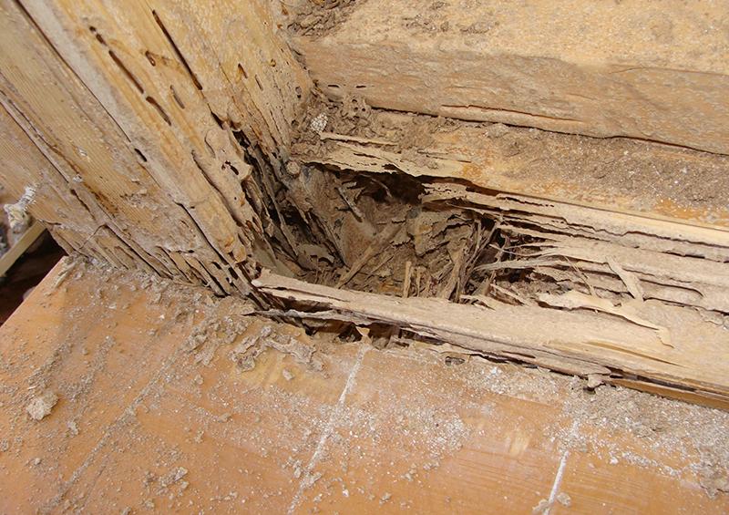 家のメンテナンス:蟻害の様子
